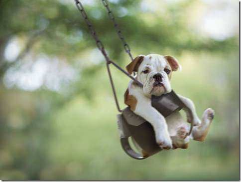 Swinging-bulldog