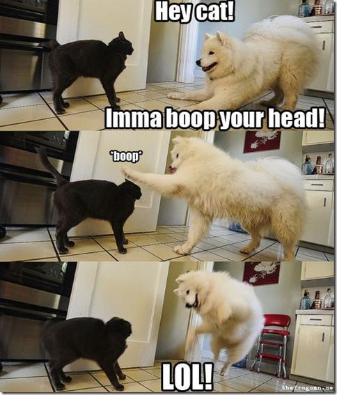 DogBoop