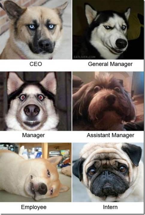 corporate-dogs