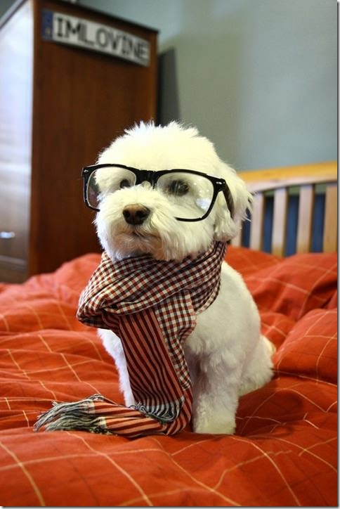 hipsterdog
