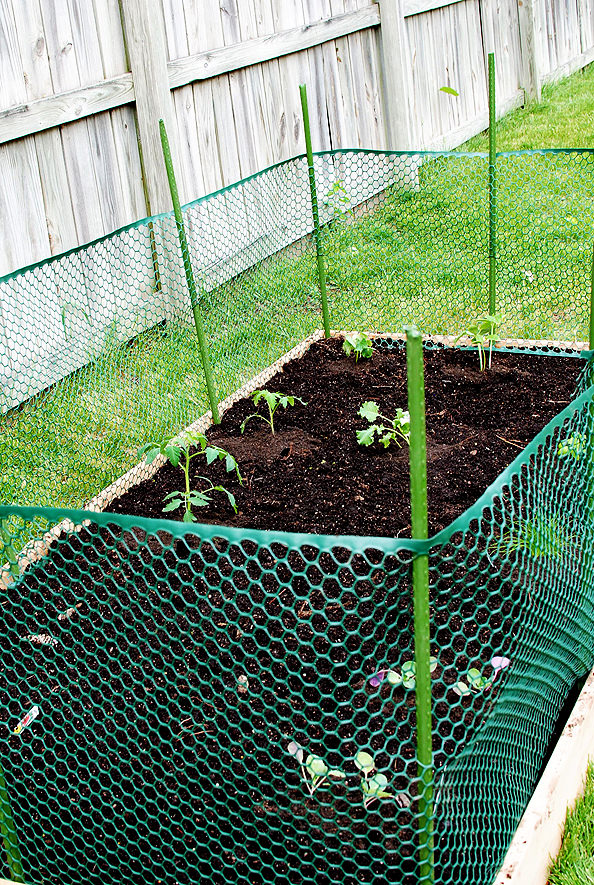 Raised Bed Vegetable Garden Fence images free download