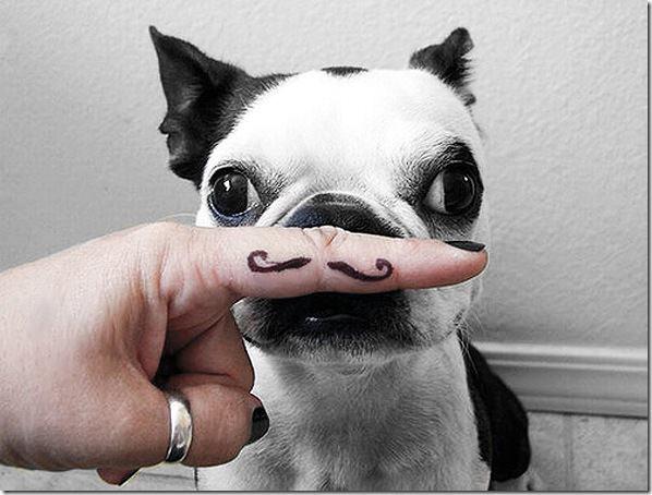 dogmustache