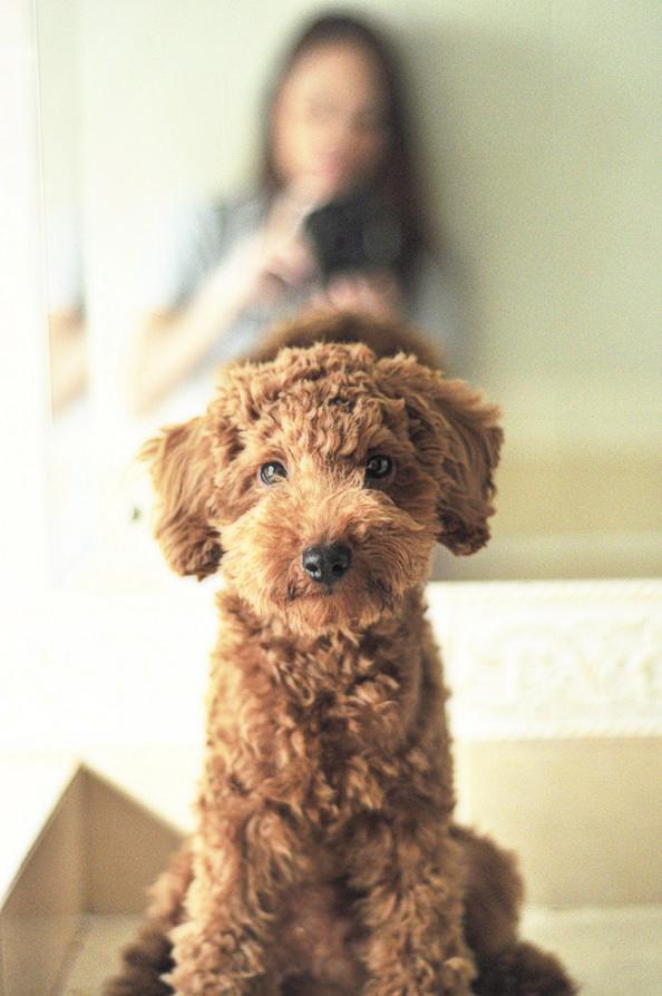 dog_mini