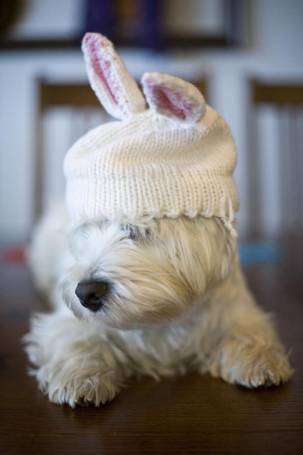 puppybunny_mini