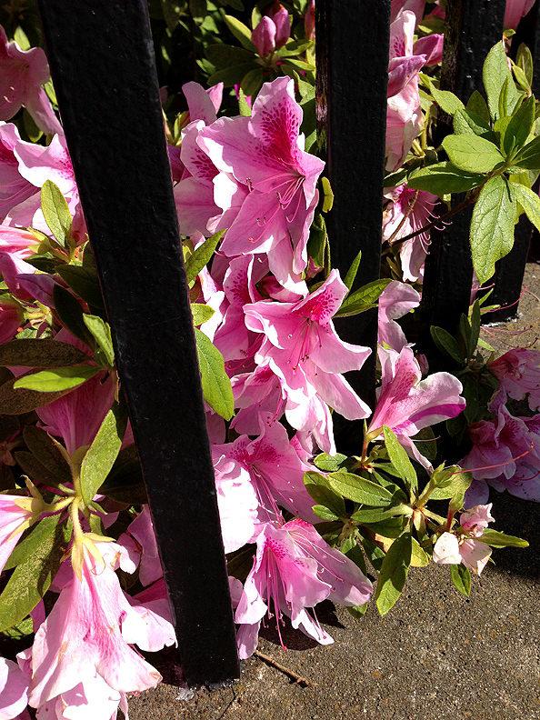 Charleston_05_mini