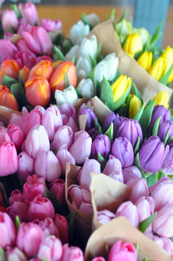 tulips_mini