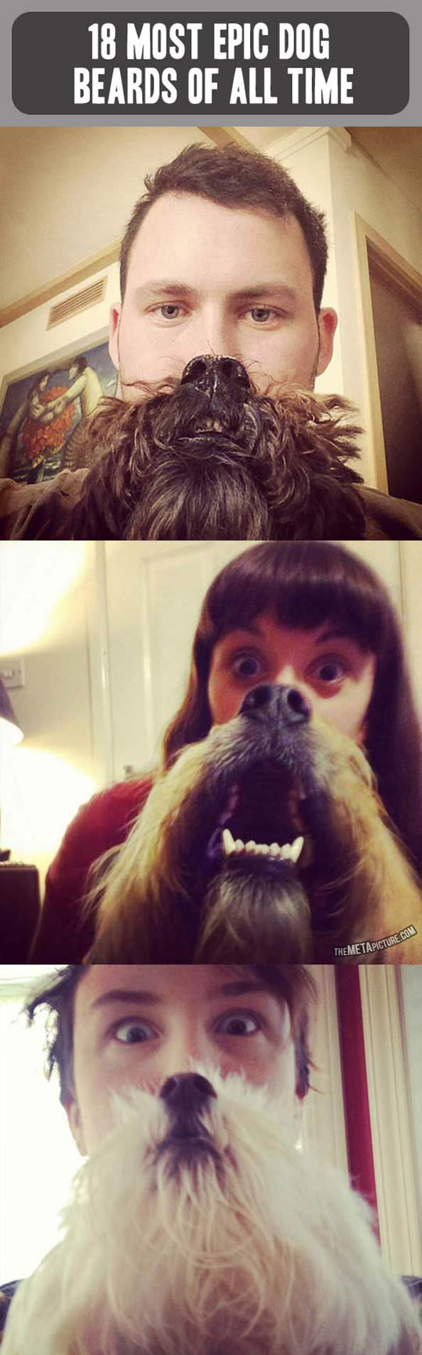 dogbeards_mini