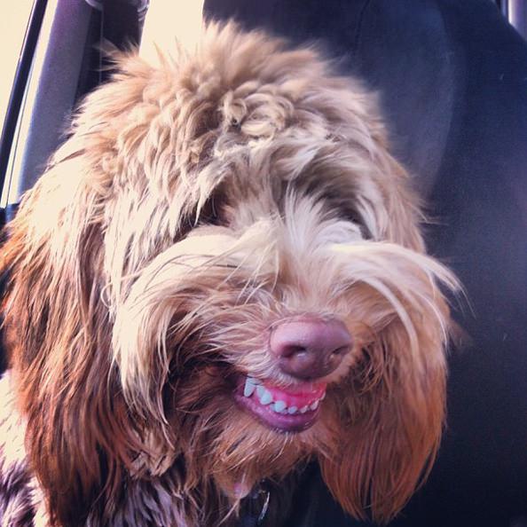 happydog_mini