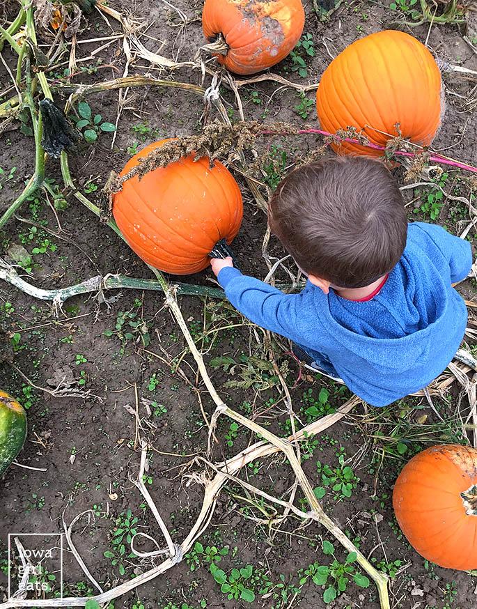 pumpkinpicking