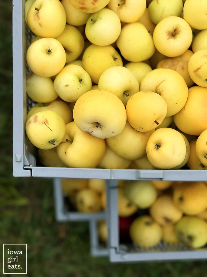 yellow apples in stacked apple crates