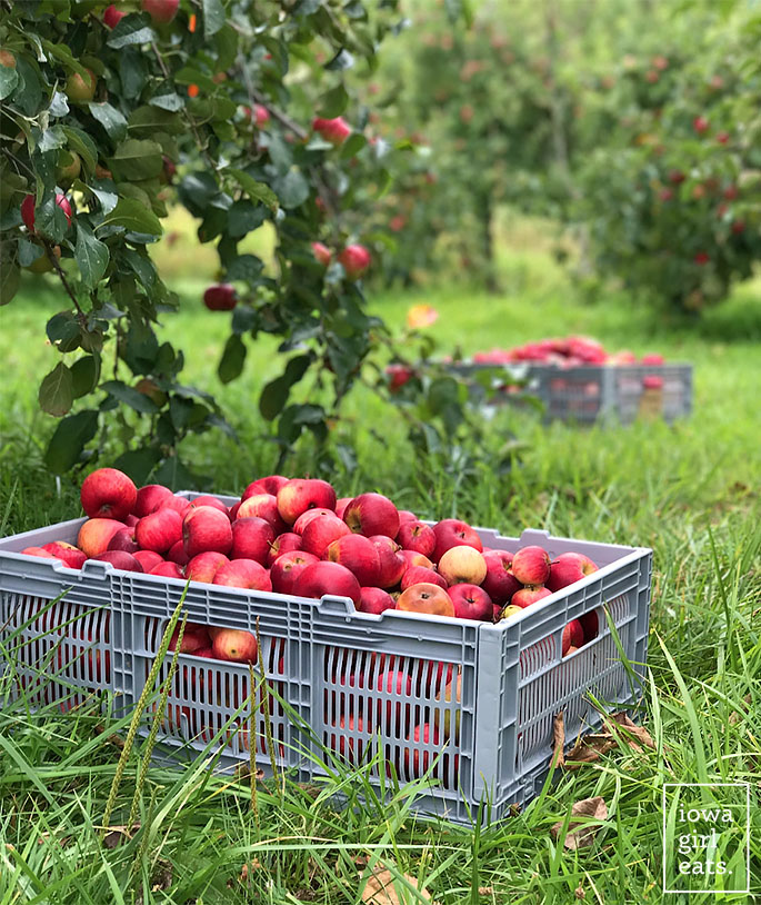 crate full of red apples